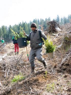 ASSIST Software volunteers planting trees in Moldovita